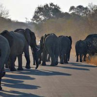 elephants - kruger national park