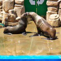 seals - ushaka marine world