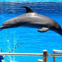 dolphin - ushaka marine world - durban