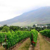 vineyards - winelands