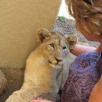 in love - lion park - johannesburg
