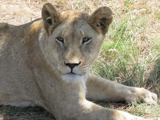 safari – IMG_5445
