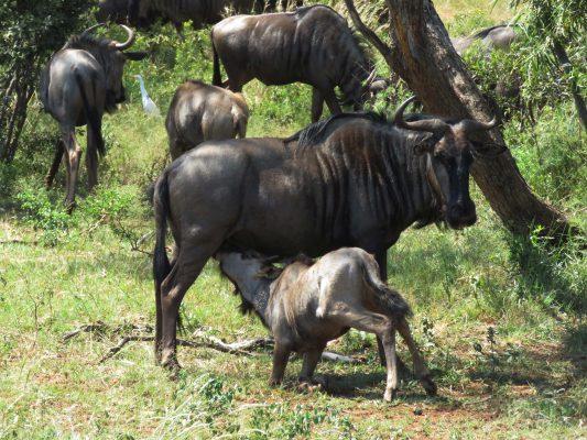 pilanesberg nature reserve – IMG_5459