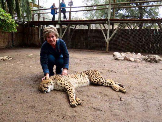 cheetah contact-garden route-IMG_2387