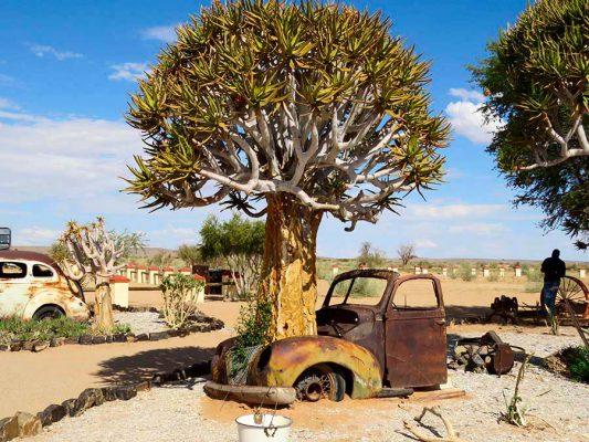 namibia – quiver tree surprise – IMG_0332j