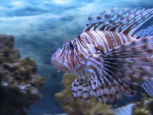 aquarium – IMG_3706