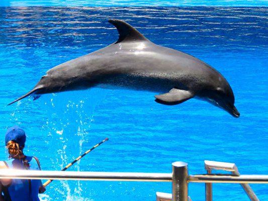 dolphin – ushaka marine world – IMG_4119j