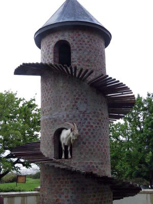 goat tower – winelands – paarl – IMG_3827j