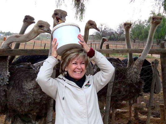 ostrich feeding – oudtshoorn – IMG_2212j