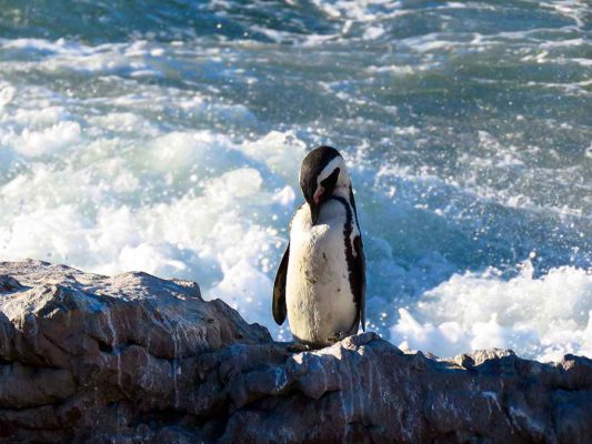 penguin – IMG_2049j