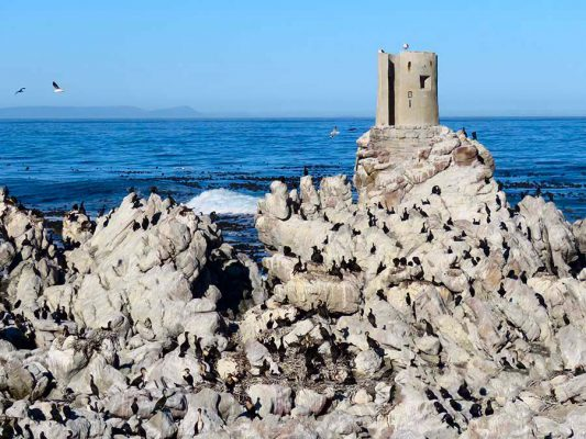 penguin colony – overberg – IMG_2021j