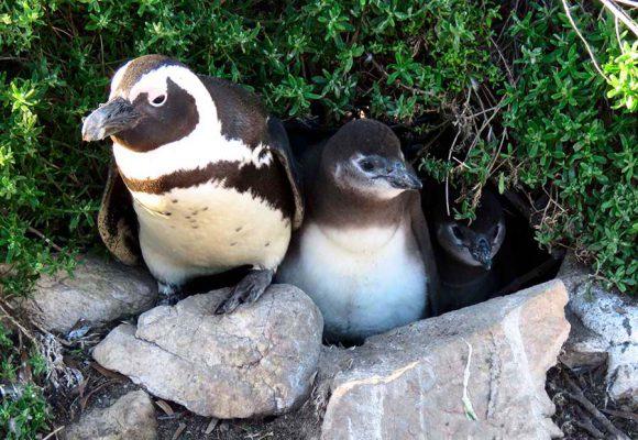 penguin family – IMG_2073j