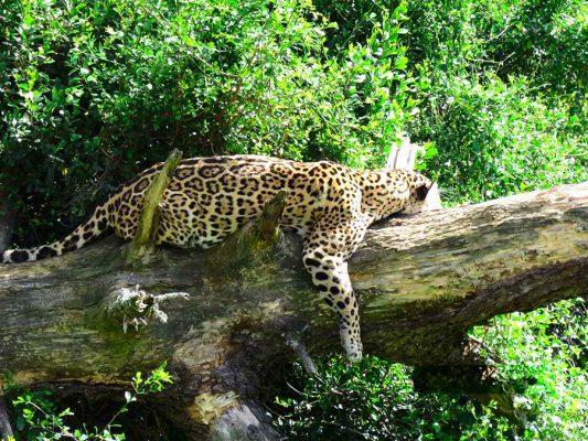 safari – IMG_3004j