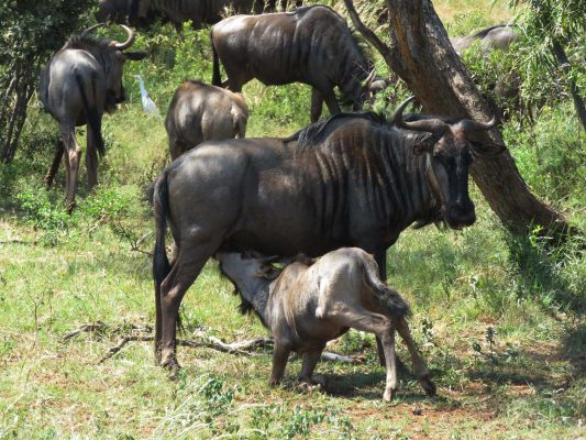 safari – IMG_5459
