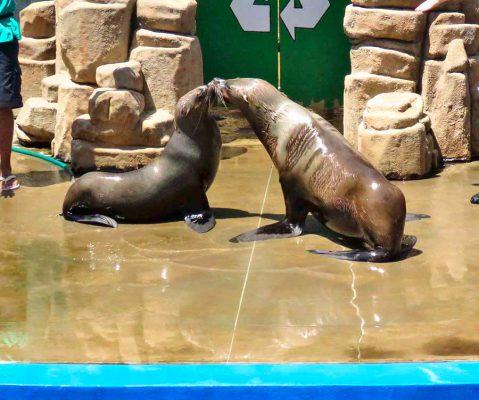 seals – ushaka marine world – IMG_3965j