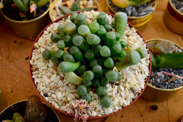 succulent – DSC_0880j