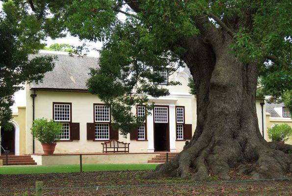 wine estate with camphor tree – IMG_4625j