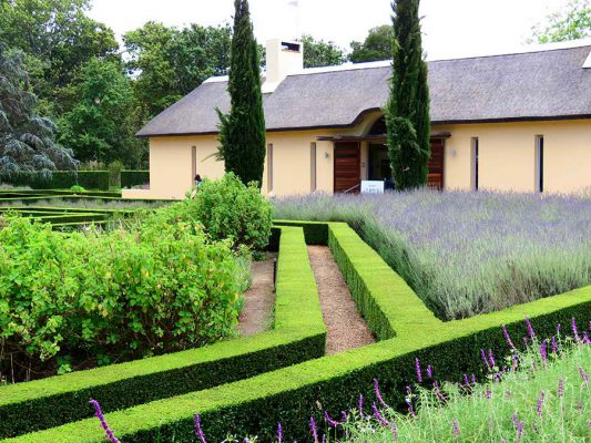 wine estate with lavender – IMG_4573j