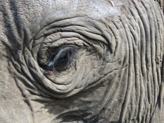 elephant close encounter – IMG_6050