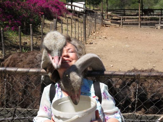 loving ostriches – IMG_5897