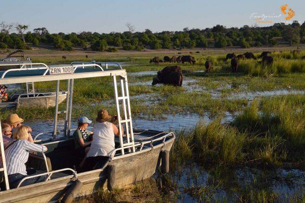 botswana safari – game viewing.