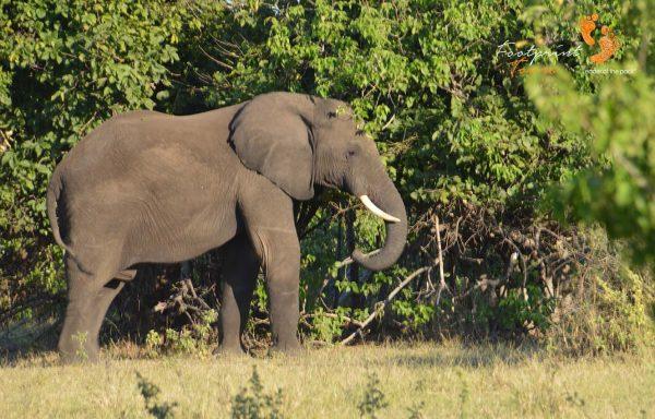 elephant – DSC_9021