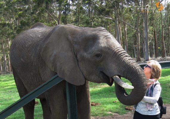 elephant feeding – IMG_6027