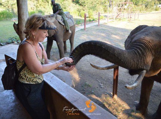 elephant feeding – botswana – DSC_8740