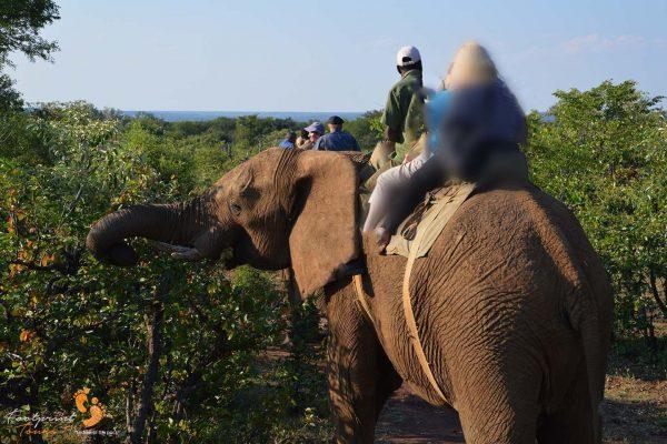 elephant ride – botswana.