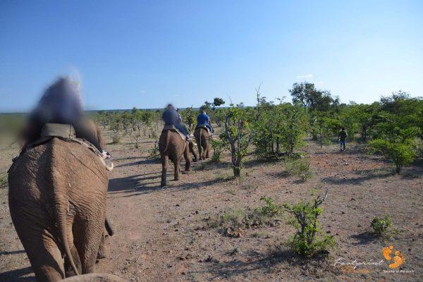 elephant rides – botswana – DSC_8711