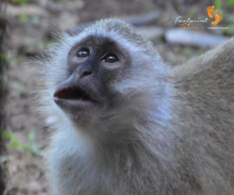 monkey talk – DSC_8662