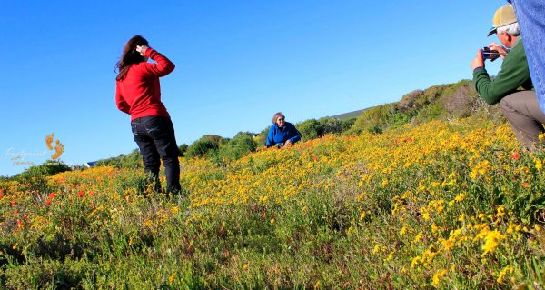 namaqua wildflower photographers