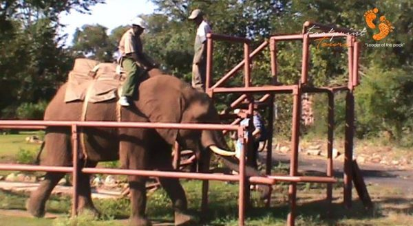 4. get ready for elephant rides