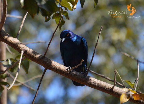 birdlife in kruger – DSC_6817