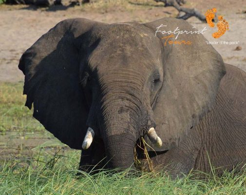 chobe botswana safari – elephant – DSC_9203