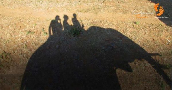elephant ride silhouette – botswana – MIV 237