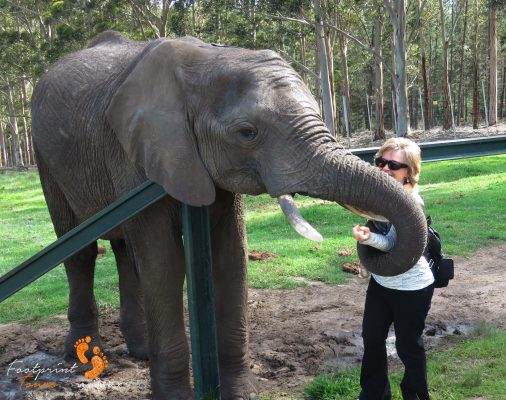 elephant trunk twist – IMG_6026