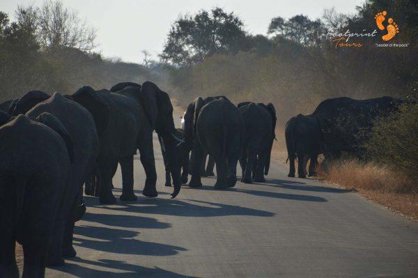 elephants in kruger – DSC_6907