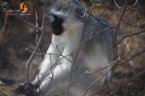 monkey brainstorm – DSC_6734
