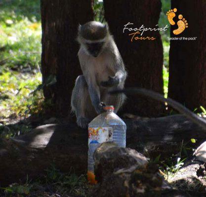 monkey snatched colddrink bottle – DSC_8851