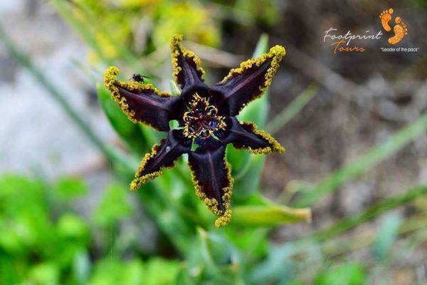 namaqua flowers – DSC_1817