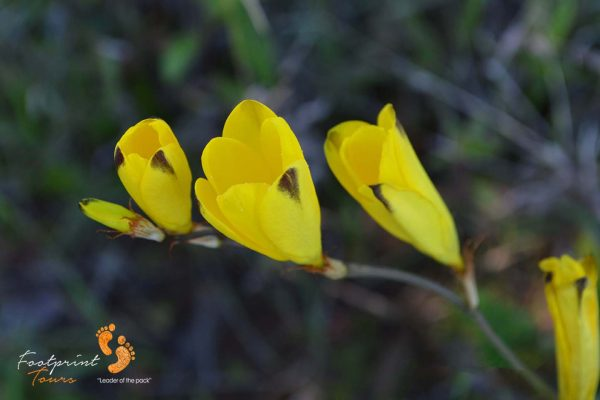 namaquas beauty – DSC_1196