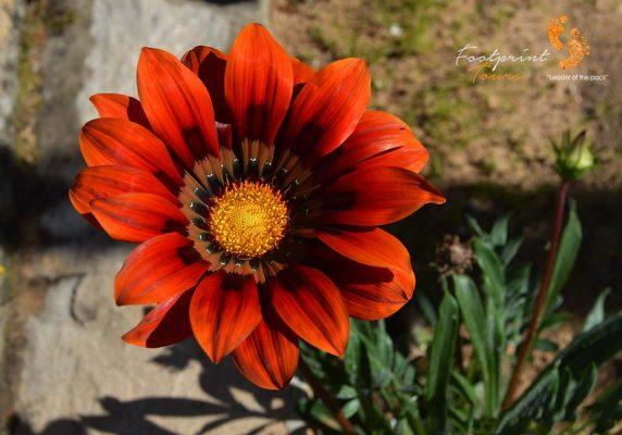 namaquas beauty – DSC_1222