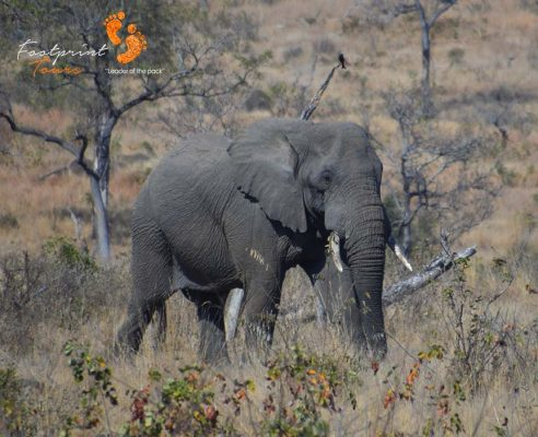 pilanesberg – elephant – DSC_6612