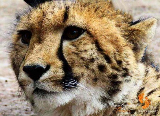 safari – game drive – IMG_2378