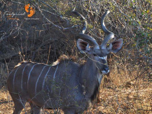 safari – kruger – DSC_6932