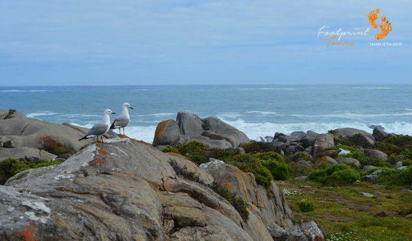 seagulls – DSC_1815