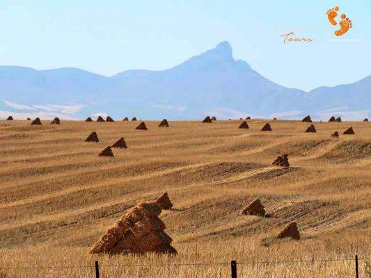 swartland bale – IMG_4333