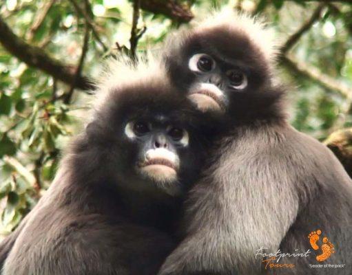 28. spetacled langur monkeys – garden route