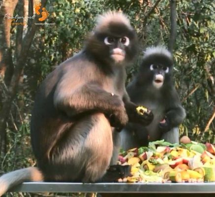 3. surprised monkeys